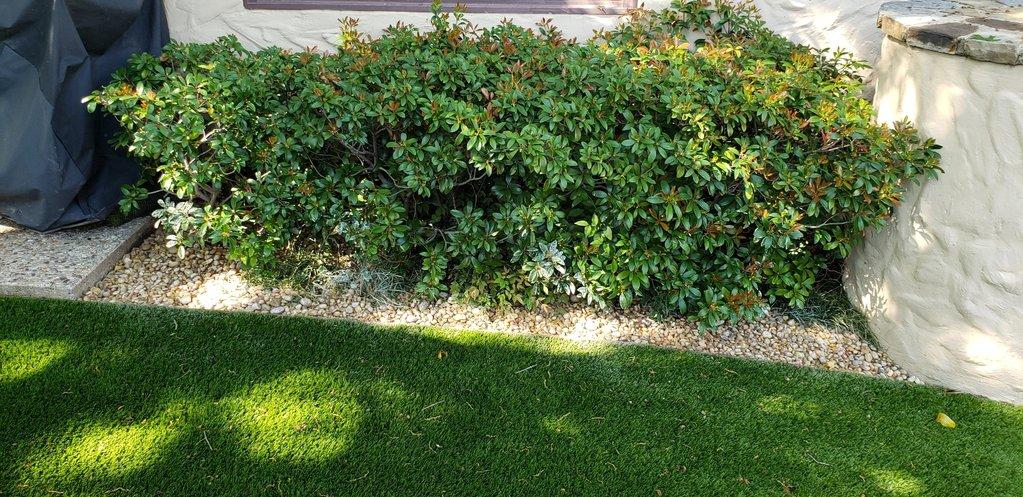 Artificial Turf Installation for Backyard | The Perfect Lawn Dallas, Texas
