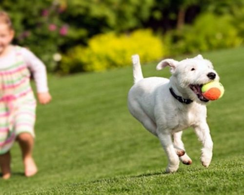 Pet-friendly synthetic turf your dog will love.